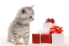 Gray kitten and boxes with gifts Royalty Free Stock Images
