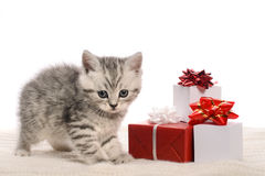 Gray kitten and boxes with gifts Royalty Free Stock Photos