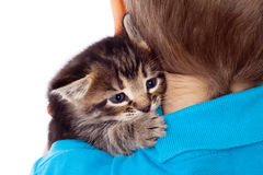 Gray kitten on boy's shoulder Royalty Free Stock Image