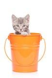 Gray kitten in a bucket stock photos