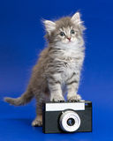 Gray kitten and camera Stock Images
