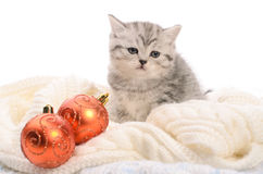 Gray kitten with christmas balls Royalty Free Stock Images