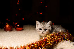 Gray kitten with christmas decorations Stock Photos