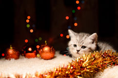 Gray kitten with christmas decorations Royalty Free Stock Images