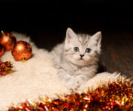 Gray kitten with christmas decorations Stock Photo
