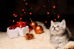 Gray kitten with christmas decorations and gifts Royalty Free Stock Images