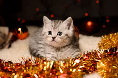 Gray kitten with christmas decorations Royalty Free Stock Photo