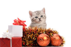 Gray kitten with christmas gifts and decorations Royalty Free Stock Photography
