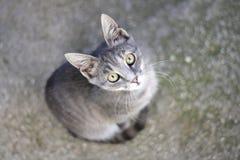 Gray kitten Stock Image