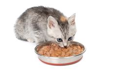 Gray kitten eats from a bowl Royalty Free Stock Photo