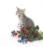 Gray kitten and flowers Royalty Free Stock Image