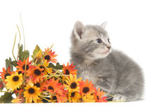 Gray Kitten and flowers Stock Photography