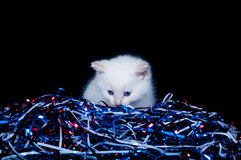 Gray kitten and fourth of july streamers Stock Photos