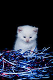 Gray kitten and fourth of july streamers Royalty Free Stock Photos