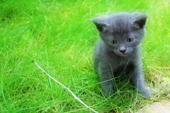 Gray kitten in the grass. stock photos