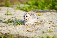 Gray kitten on a gray sand in the grass Stock Photo