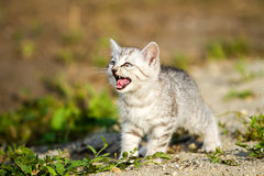 Gray kitten on a gray sand in the grass Royalty Free Stock Photo