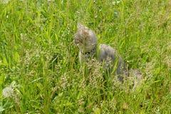 Gray kitten among the green grass Royalty Free Stock Photos