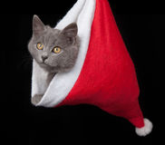 Gray kitten hides inside of a red santa hat. On black background Stock Images