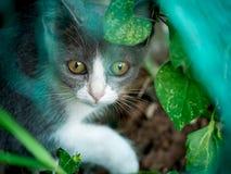 Gray Kitten Hiding i trädgården royaltyfri fotografi