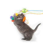 Gray kitten jumping up and playing with toy Royalty Free Stock Images