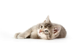 Gray kitten laying down and looking up Stock Photos