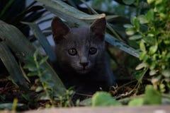 Gray kitten. Little gray kitten between plants Stock Images