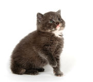 Gray kitten looking up Royalty Free Stock Images