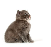 Gray kitten looking up Stock Photos