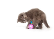 Gray kitten playing with toy Royalty Free Stock Image