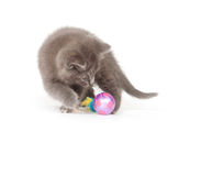 Gray kitten playing with toy Royalty Free Stock Images