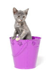 Gray kitten in purple pale Royalty Free Stock Photography