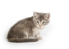 Gray kitten resting Stock Photo
