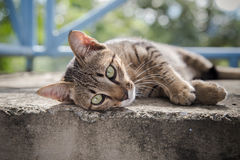 Gray kitten is resting on concrete floor Stock Photos