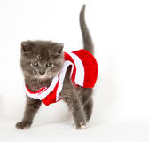 Gray kitten in santa suit Royalty Free Stock Image
