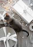 Gray kitten touches Christmas balls on a gift box stock photography