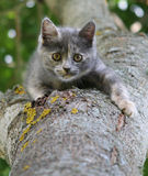 Gray kitten on a tree Stock Photos