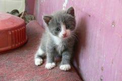 Gray kitten Stock Photo