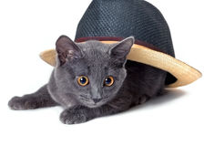 Gray kitten under the hat Royalty Free Stock Image