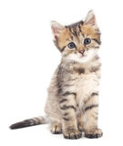 Gray kitten. Royalty Free Stock Photography