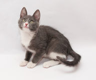 Gray kitten with white spots and yellow eyes sits anxiously look Royalty Free Stock Images
