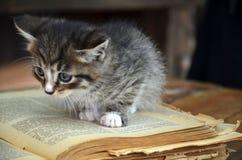 Gray kitten with white stripes. Black kitten with white stripes read book Stock Image