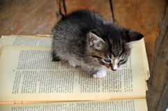 Gray kitten with white stripes. Black kitten with white stripes read book Stock Photo