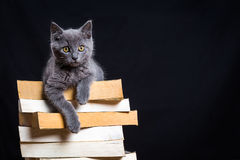 A gray kitten with yellow eyes lying on a pile of books Royalty Free Stock Photography
