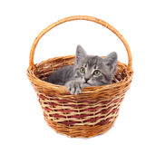 Gray kitty in a basket Stock Image
