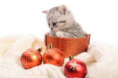 Gray kitty in box and christmas balls Royalty Free Stock Images
