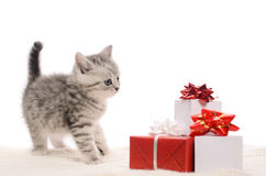 Gray kitty and boxes of gifts Royalty Free Stock Photos