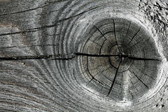 Gray knotty wood texture Stock Image