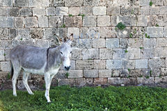Donkey & Wall Royalty Free Stock Images