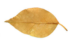 Gray Leaf Royalty Free Stock Image